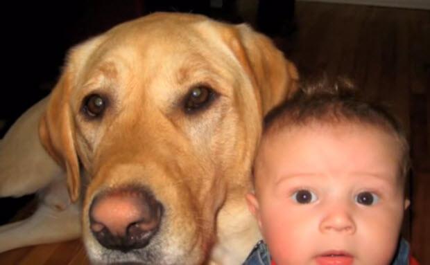 labrador-retriever-true-friend-2