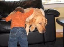 labrador retriever a true friend to this baby