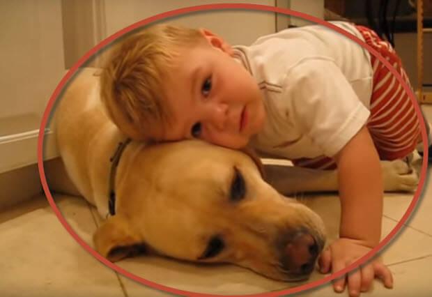 boy loves labrador dog