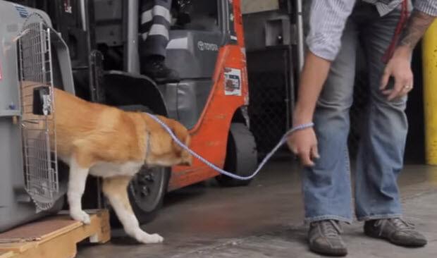 marine-reunites-with-dog-he-saved-2