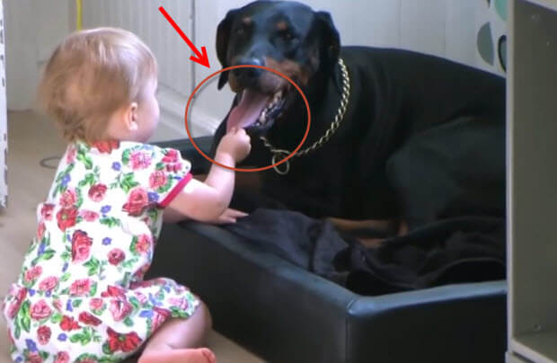 babies-with-huge-dogs-playing-3