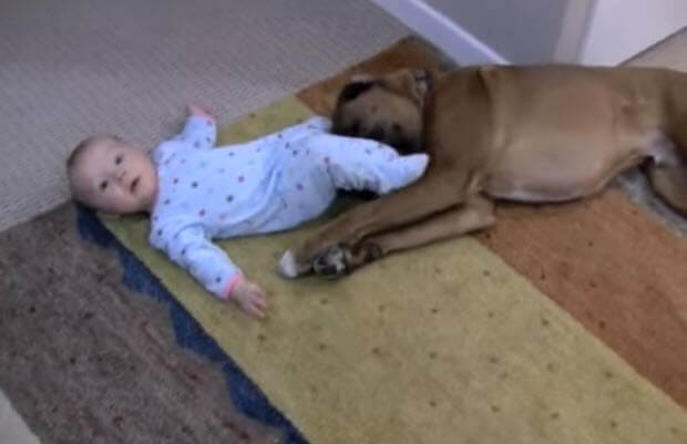 baby-playin-with-her-boxer-dog