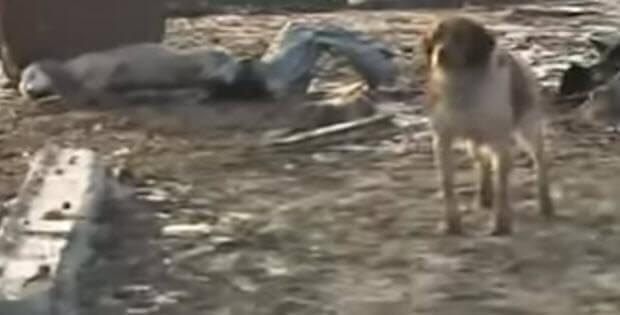 dog-begs-cameraman-to-save-friend-2