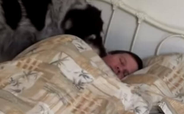 dogs wake up owners, so cute