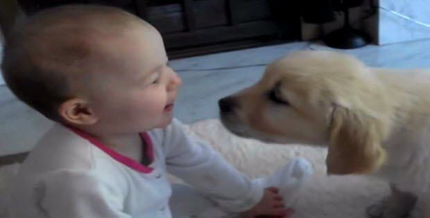 dogs-meeting-babies-first-time-2