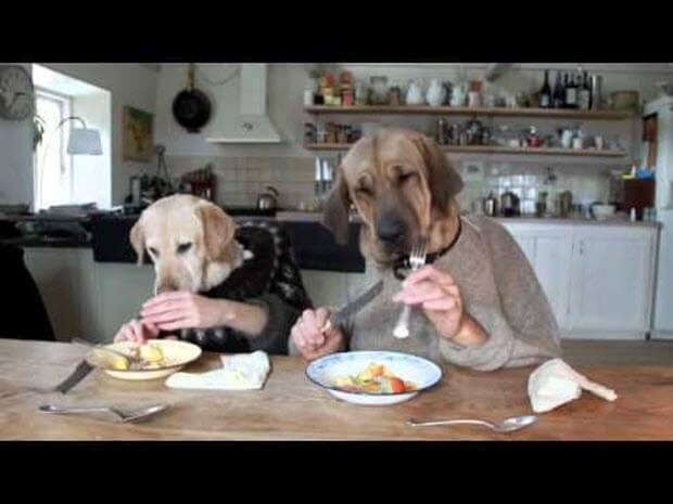 two dogs dining at the restaurant