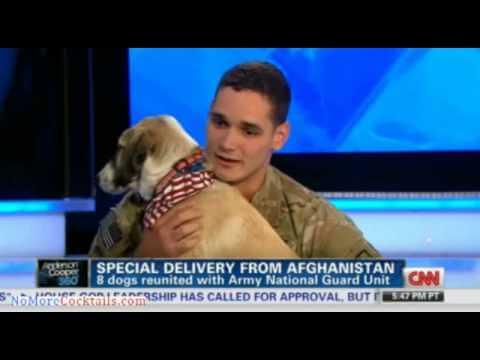 dog reunion video