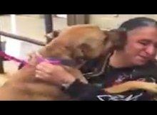 heartfelt dog reunion