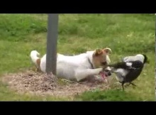 cute puppy playing with bird