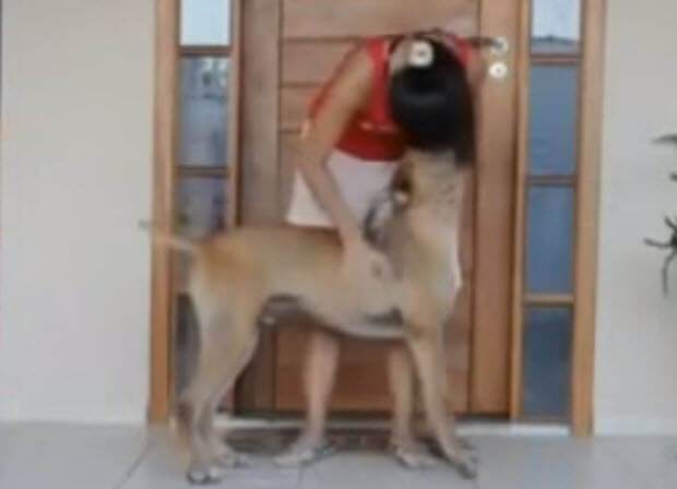 rescued dog shows love