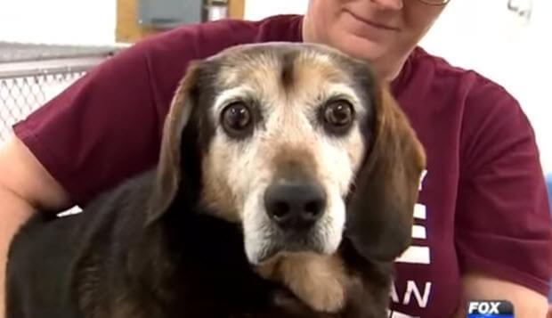 dog-missing-764-days