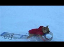 dog steals slide