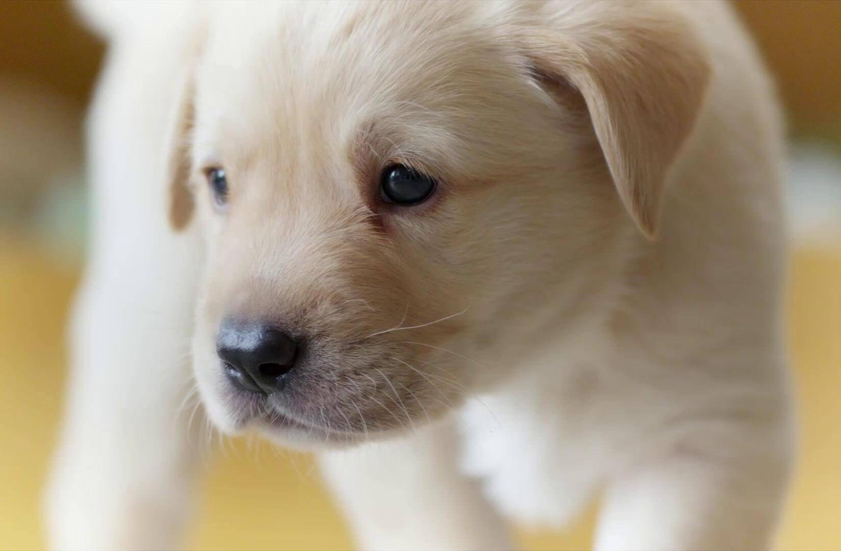 When These Lab Puppies Open Their Eyes For The First Time What They