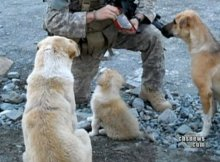 dogs save soldiers lives