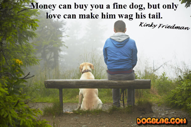 money-can-buy-you-dog