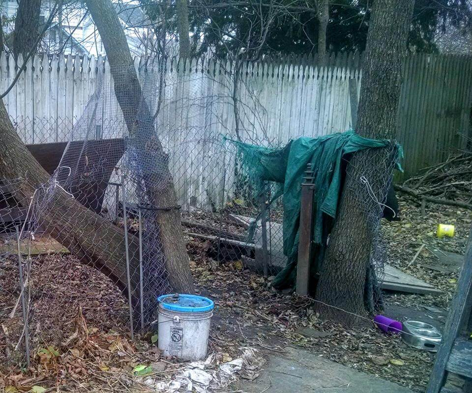 dog-chained-back-yard-pregnant-2