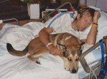 dog-hospital-room