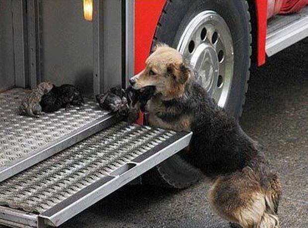 dog runs into burning building