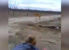 cruel dog owner