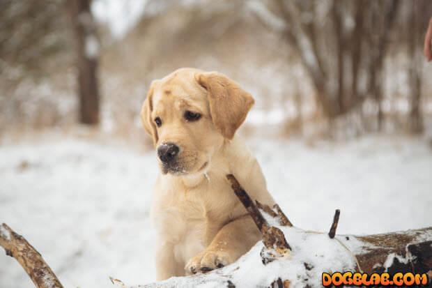 puppy_snow_forest