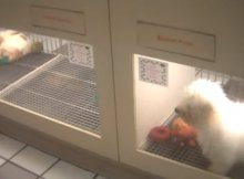 Deception Pets Stores Deploy Sell Puppies