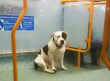 dog was abandoned on the bus