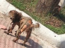 dog-transform