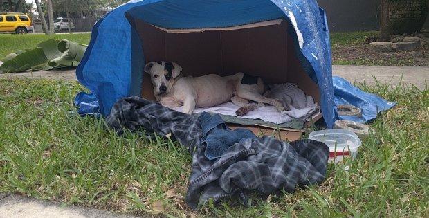 abandoned dog waiting family