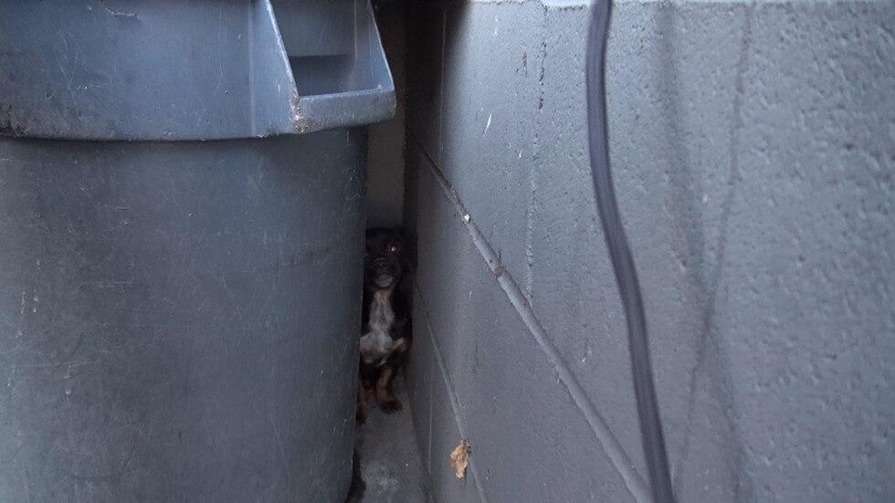 dumpster-rescue-2