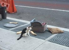 cat abandoned on the street