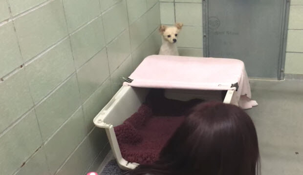 mother dog surrendered at shelter without her newborns