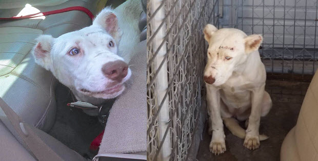 dog wakes up rescuer