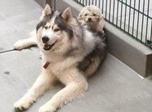 Homeless Dogs Bond For Life
