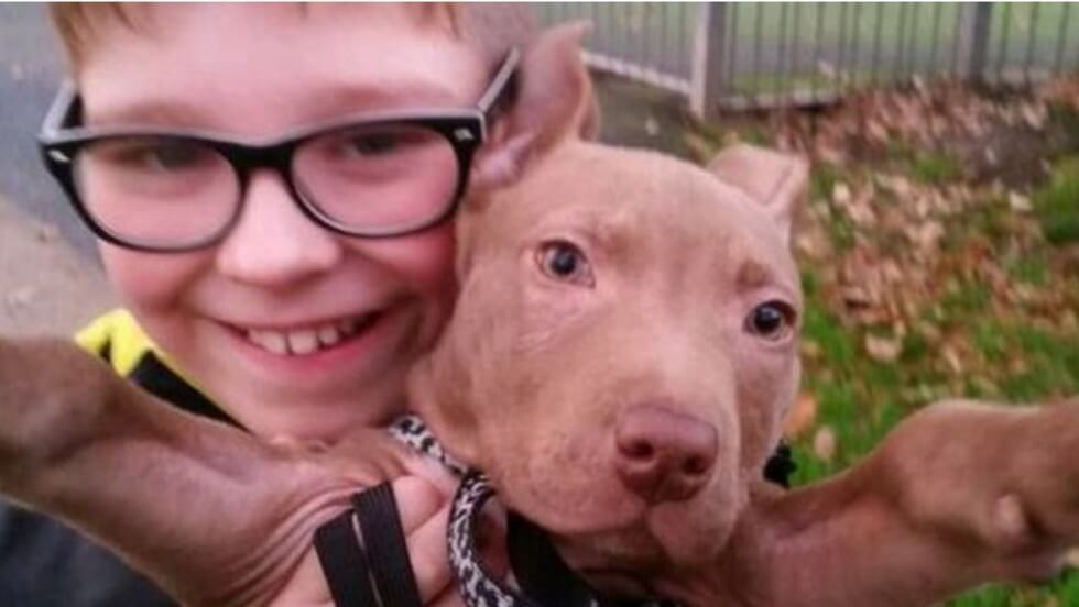 police seize pit bull