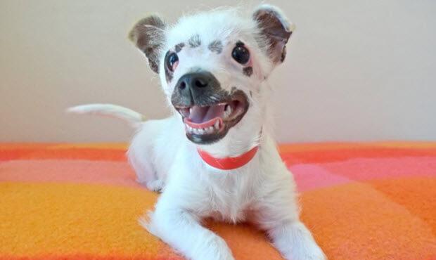 Unusual Looking Puppy