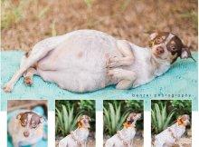 pregnant dog photos