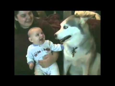 babies+dogs