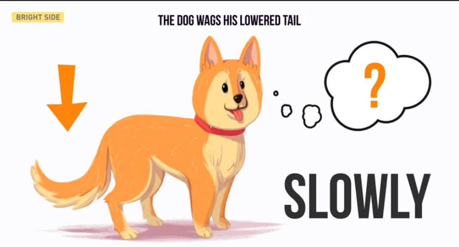 What Makes A Dog S Tail Wag