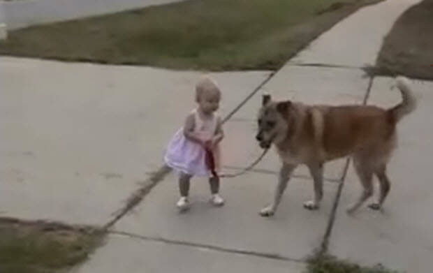 babies-with-medium-dogs