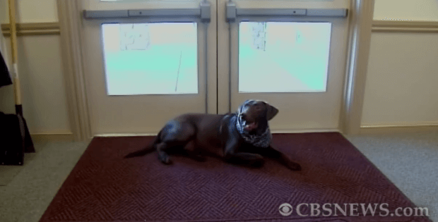 dog at funeral home