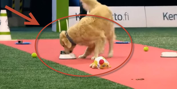 dog-competition-dog-eats-all