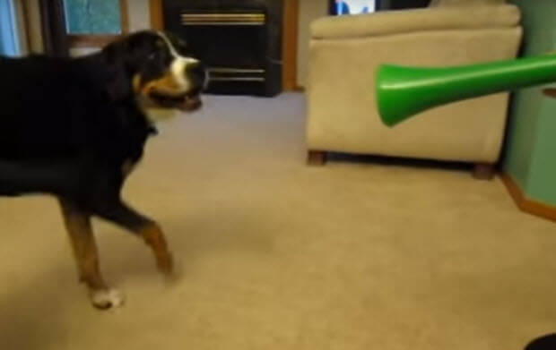 vuvuzela-vs-dog-1