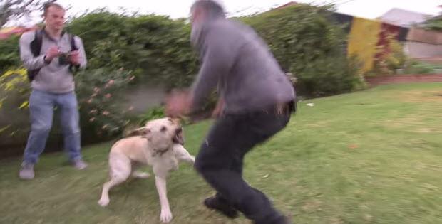 Dog Whisperer House Training