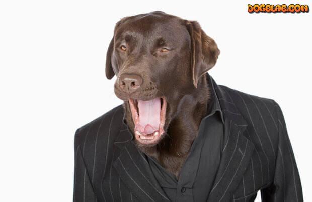 choc-lab-in-suit