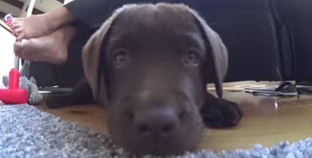puppy-doesnt-like-camera5