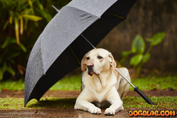 smart-dog-under-umbrela-rain