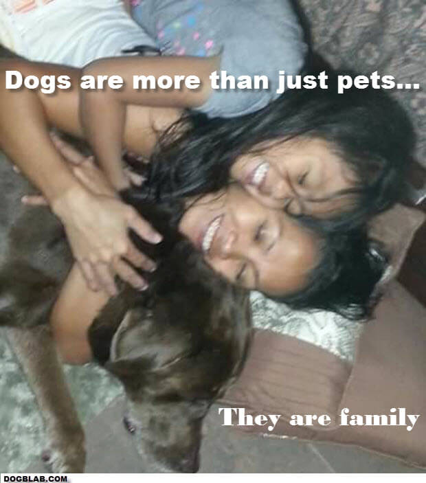 DOGS ARE MORE THAN JUST PETS