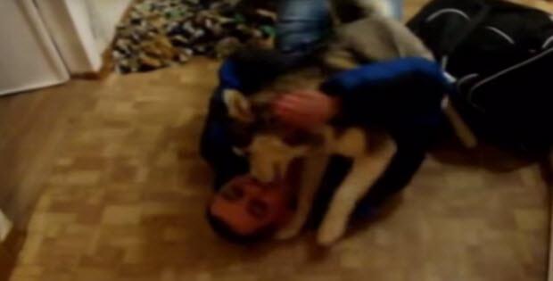 husky-meets-dad3