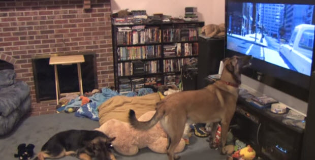 dogs-favorite-cartoon-bolt