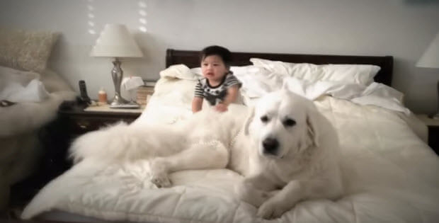 funny-dogs-with-babies4